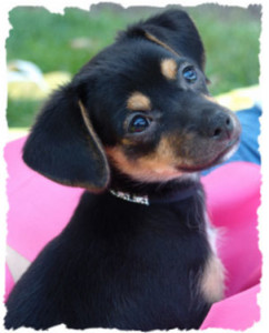 Pet Gallery Veterinarian And Animal Hospital In Affton Mo
